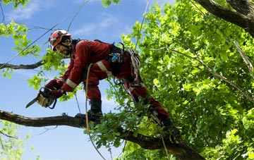 find trusted rated Na H Eileanan An Iar tree surgeons